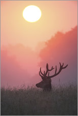 Vinilo para la pared  A male deer Stag at sunset - Alex Saberi