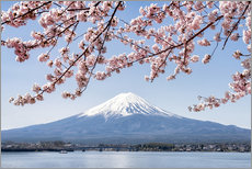 Vinilo para la pared  Mountain Fuji and cherry blossom at lake Kawaguchiko, Japan - Jan Christopher Becke