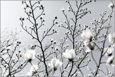 Vinilo para la pared White Blossoms 1