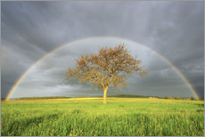 Vinilo para la pared  Plane Tree in Meadow with Rainbow in Spring, Bad Mergentheim, Baden-Wurttemberg, Germany - Radius Images