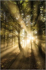 Vinilo para la pared  Sunbeams bursting through misty autumnal woodland, Limpsfield Chart, Oxted, Surrey, England, United - Lee Frost