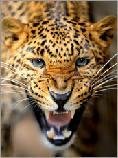 Póster  Fuming Leopard