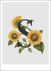 Aluminio-Dibond  S is for Sunflower - Charlotte Day