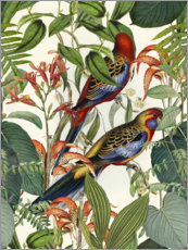 Póster  Aves tropicales - Andrea Haase