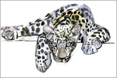 Cuadro de metacrilato  Leopardo arabe - Mark Adlington