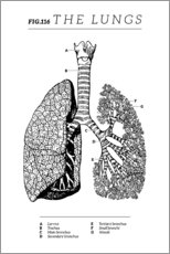 Póster  Los pulmones (inglés) - Wunderkammer Collection