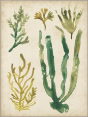 Vinilo para la pared  Vintage Seagrass I - June Vess