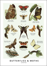 Póster  Mariposas (ingles) - Wunderkammer Collection