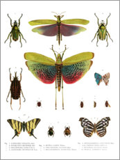 Lienzo  Colores de los insectos I - Wunderkammer Collection
