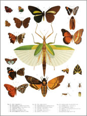 Póster  Colores de los insectos IIX - Wunderkammer Collection