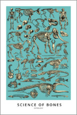 Póster  Osteología (inglés) - Wunderkammer Collection