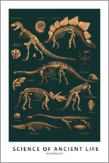 Póster  Paleontología (inglés) - Wunderkammer Collection