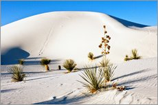 Cuadro de plexi-alu  White Sands National Monument - Transverse Dunes and Soaptree Yucca - Bernard Friel