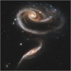 Vinilo para la pared  Arp 273 interacting galaxies in Andromeda. - Stocktrek Images