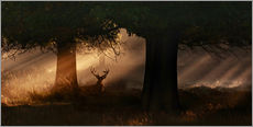 Vinilo para la pared  The silhouette of a Roth Irschs, Cervus elaphus, in the morning in the autumn mist - Alex Saberi