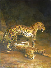 Vinilo para la pared  Two Leopards lying in the Exeter Exchange - Jacques Laurent Agasse