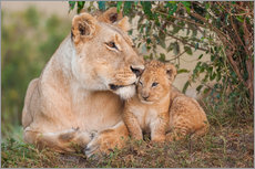 Ingo Gerlach - Mother love at the lion
