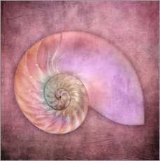 Vinilo para la pared  Sea shell - INA FineArt