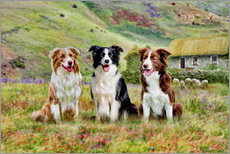 Cuadro de plexi-alu  Border Collies - Selina Morgan
