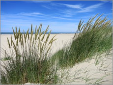 Cuadro de plexi-alu  thriving beach grass in the dunes - Susanne Herppich