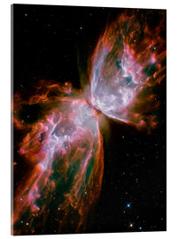 Cuadro de metacrilato  The Butterfly Nebula - Stocktrek Images