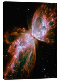 Lienzo  The Butterfly Nebula - Stocktrek Images