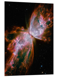 Cuadro de PVC  The Butterfly Nebula - Stocktrek Images