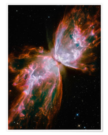 Póster  The Butterfly Nebula - Stocktrek Images