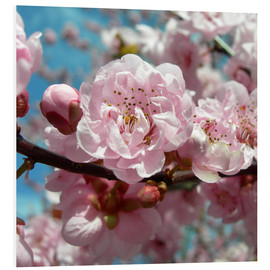 Cuadro de PVC  Cherry Blossoms - blackpool