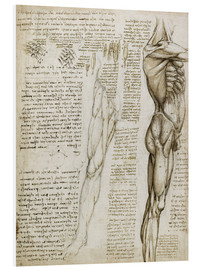 Forex  The muscles - Leonardo da Vinci