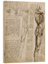 Madera  The muscles - Leonardo da Vinci