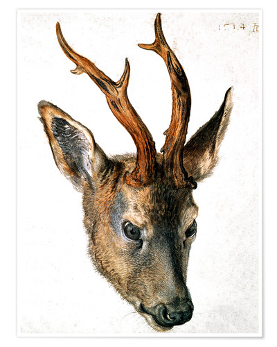 Póster Head of a Roe Deer