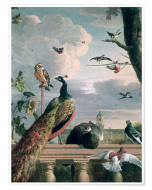 Póster  Palace of Amsterdam with Exotic Birds - Melchior de Hondecoeter
