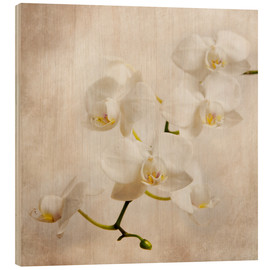 Madera  white orchid - Hannes Cmarits