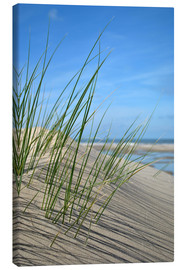 Lienzo  Dune grasses before playscape - Susanne Herppich
