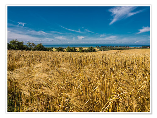 Póster Landscape with corn field and Baltic Sea