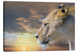 Lienzo  Lioness at sunset - Werner Dreblow