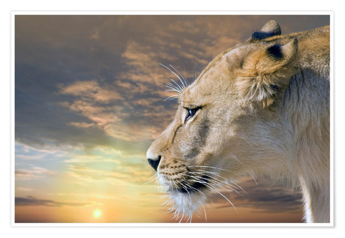 Póster Lioness at sunset