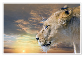 Póster  Lioness at sunset - Werner Dreblow