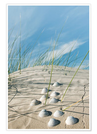 Póster Dune with sea shells
