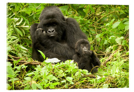 Metacrilato  Eastern Gorilla with baby between leaves - Joe & Mary Ann McDonald