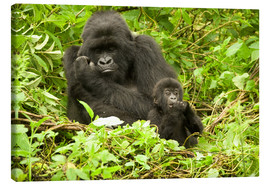 Lienzo  Eastern Gorilla with baby between leaves - Joe & Mary Ann McDonald