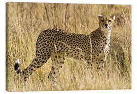 Lienzo  Cheetah stands between dry grasses - Ralph H. Bendjebar
