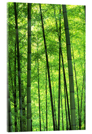 Metacrilato  Tree trunks in a bamboo forest - Keren Su
