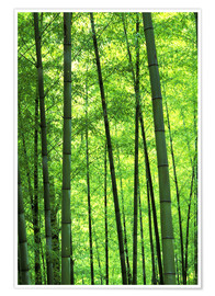Póster  Tree trunks in a bamboo forest - Keren Su