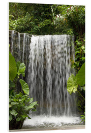 Forex  Waterfall in the Botanical Garden Orchid Garden in Singapore - Cindy Miller Hopkins