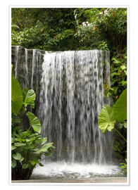 Póster  Waterfall in the Botanical Garden Orchid Garden in Singapore - Cindy Miller Hopkins