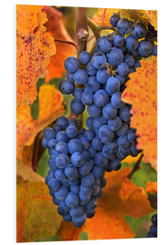 Forex  Grapes with autumn leaves - Janis Miglavs