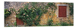 Cuadro de PVC  Climbing roses cover an old stone wall - Ric Ergenbright