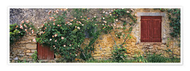 Póster  Climbing roses cover an old stone wall - Ric Ergenbright